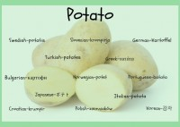 Potatoes Around the World
